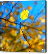 Autumn Twist Acrylic Print