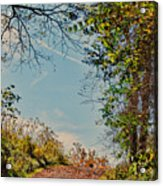 Autumn Up Hill Acrylic Print