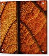 Autumn Veins Acrylic Print
