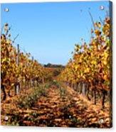 Autumn Vines Acrylic Print by K McCoy