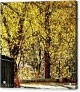 Autumn Walkway Acrylic Print