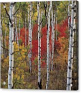 Autumn Warm Acrylic Print