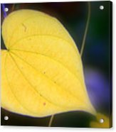Autumn Whisper Acrylic Print