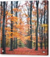 Autumn Whispers I Acrylic Print by Artecco Fine Art Photography