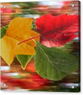 Autumn Wind Acrylic Print