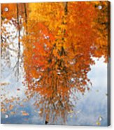 Autumn With Colorful Foliage And Water Reflection 19 Acrylic Print