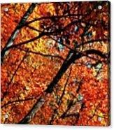 Autumn Wonder Acrylic Print