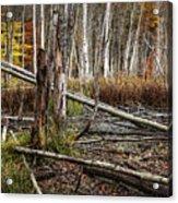 Autumn Woodland Marsh Scene Acrylic Print