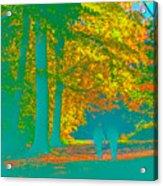 Autumn Woodland Walk Turquoise Acrylic Print