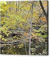 Autumn Woods 2 Acrylic Print