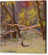 Autumn Yearling Acrylic Print