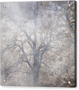 Autumn4 Acrylic Print