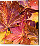 Autumnal Carpet Acrylic Print by Meirion Matthias