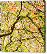 Autumnal Colours Acrylic Print