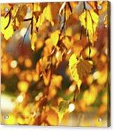 Autumnal Curtain Acrylic Print