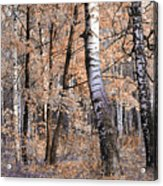 Autumnal Lightness Acrylic Print