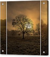 Autumnal Triptych. Acrylic Print