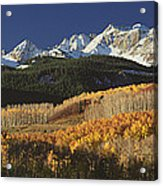 Autumnal View Of Aspen Trees And The Acrylic Print