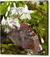 Autumnleaf Butterfly Acrylic Print