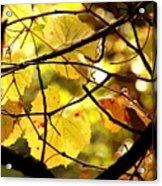 Autumn's Revelry Acrylic Print