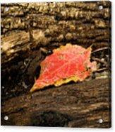 Autumn's End Acrylic Print
