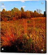 Autumns Field Acrylic Print