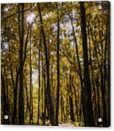 Autumns Fire Acrylic Print