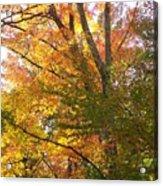 Autumn's Gold - Photograph Acrylic Print