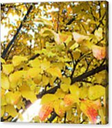 Autumns Gold Acrylic Print