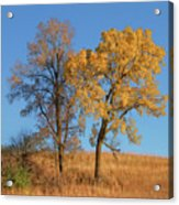 Autumn's Gold - No 1 Acrylic Print