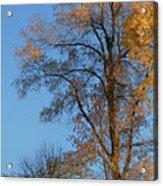Autumn's Gold  - No 2 Acrylic Print