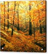 Autumns Hidden Sanctuary Acrylic Print