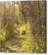 Autumns Path Acrylic Print