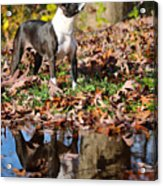 Autumn's Reflection Acrylic Print