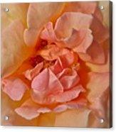 Autumns Rose Acrylic Print