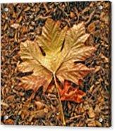 Autumn's Textured Maple Leaf Acrylic Print