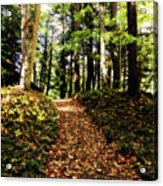 Autumn's Trail Acrylic Print