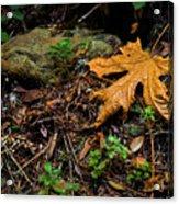 Autumn's Treasure Acrylic Print
