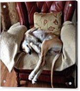 Ava - Asleep On Her Favourite Chair Acrylic Print