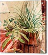 Avacado And Spider Plant Acrylic Print
