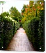 Avenue Of Dreams 2 Acrylic Print