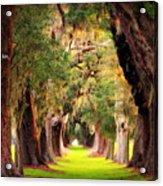 Avenue Of Oaks 2 I Am The Way Acrylic Print