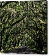 Avenue Of Oaks Acrylic Print