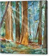 Avenue Of The Giants Acrylic Print