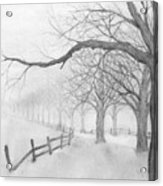 Avenue Of Trees Acrylic Print