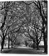 Avenue Of Trees Monochrome Acrylic Print