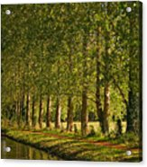 Avenue Of Trees On The Kennet And Avon Canal Acrylic Print