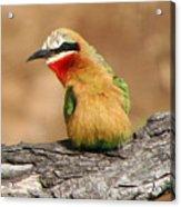 Avian Jewel Acrylic Print
