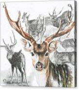 Axis Deer Acrylic Print