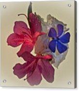 Azalea Bouquet Majic Acrylic Print